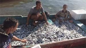 إدارة المصائد السمكية المحلية في العقبة