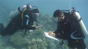 التحقق من صحة المرجان
