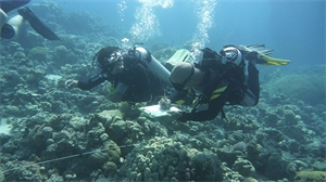الرصد البيئي الساحلي والاقتصادي الاجتماعي في متنزه العقبة البحري